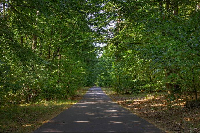 Asphaltierte Strecke durch den Wald (Foto: templiner.de)