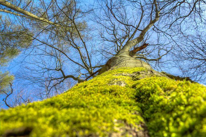 Bäume sind geduldige Zeitzeugen (Foto: templiner.de)