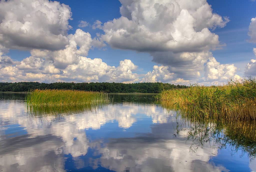 Natur auf und am Lübbesee (Foto: templiner.de)